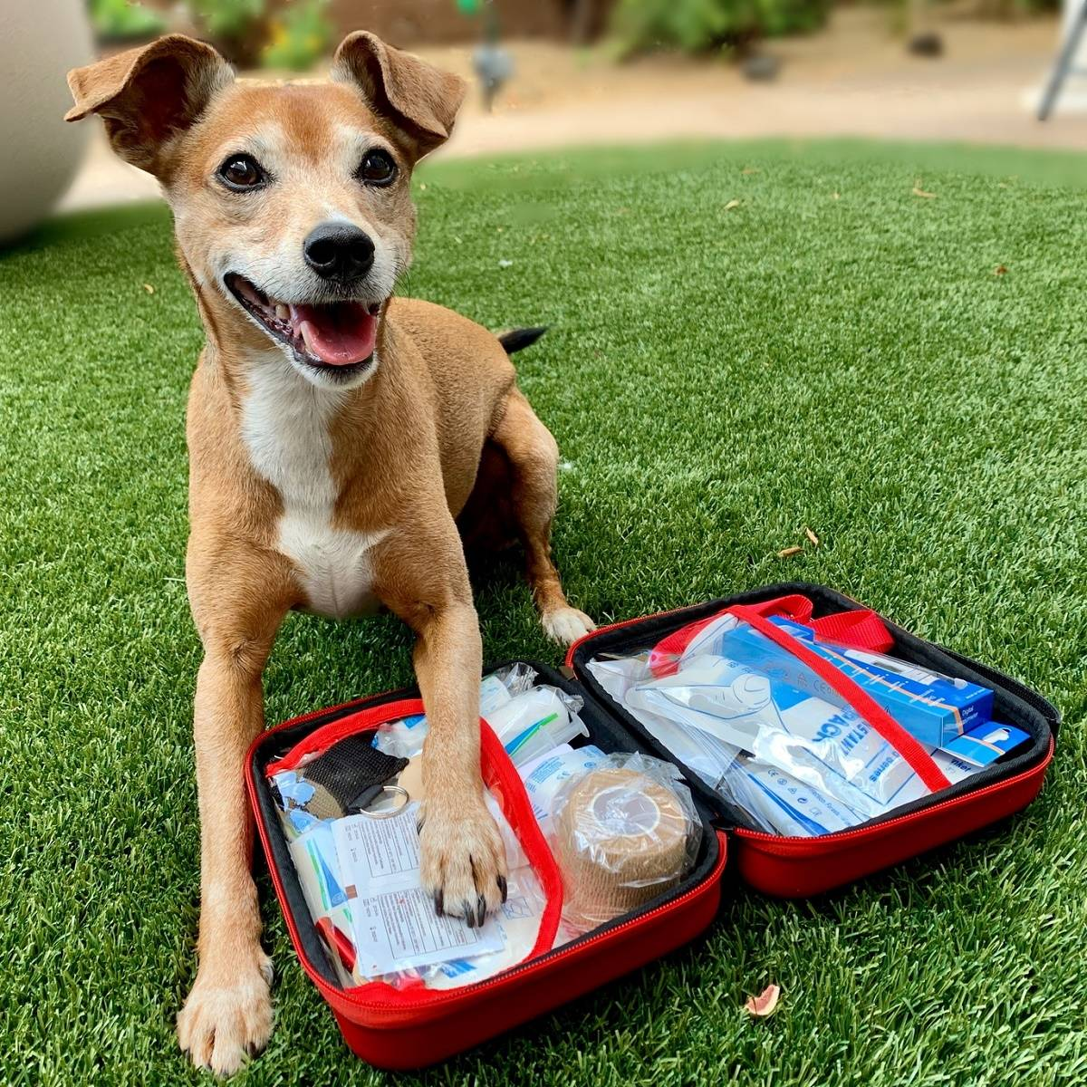Deluxe Pet First Aid Kit 60+ Emergency Items, Veterinarian Approved image 7