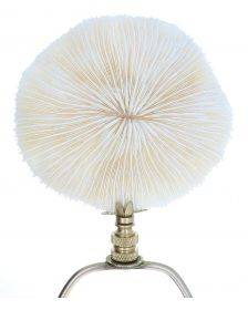 Art Finial - Mushroom Coral Shell with Brass Base, Set of 2, Mini Works of Art, Update Your Lamps!